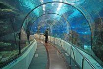 Barcelona aquarium - study abroad Barcelona