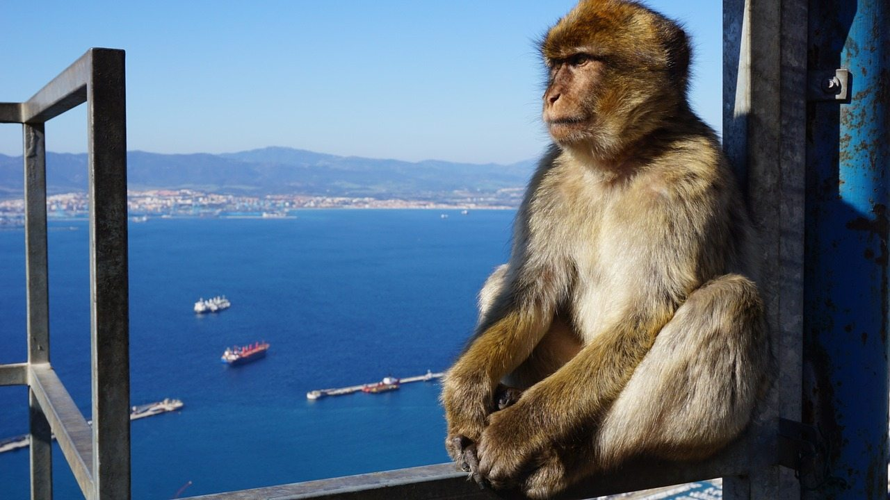 Excursion to Gibraltar - MundoLengua´s programs