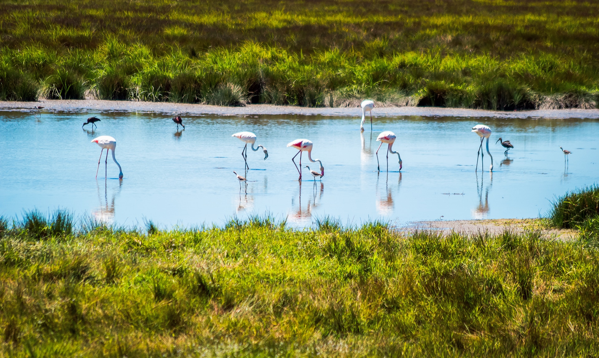 Excursion in Doñana - Tours in Andalucia