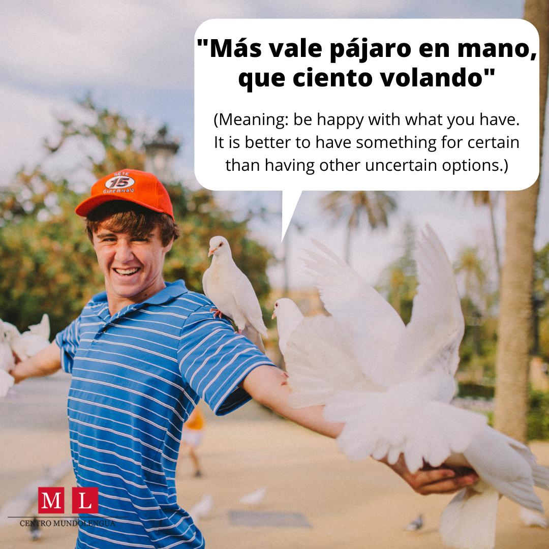 popular Spanish saying - más vale pájaro en mano, que ciento volando